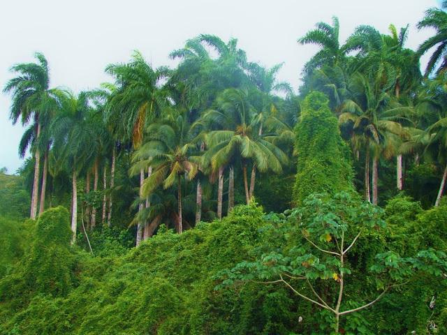 Imag Cuba Paisaje Naturaleza_5