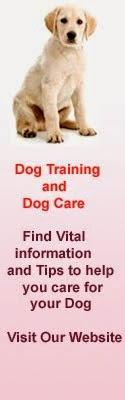 Dog Training and Dog Care