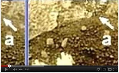 金星舊照片詭異毒蠍