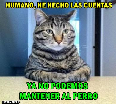 gato-mantenimiento-perro-meme