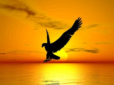 Mơ thấy nách mọc cánh có ý nghĩa gì?