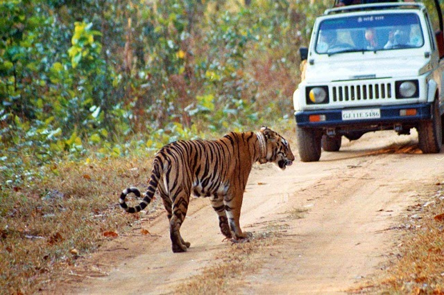 Jeep Safari in Manas National Park, Assam