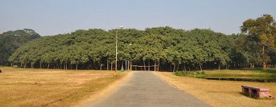 Entrance to the Great Banyan tree