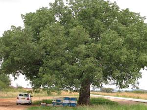 Kom rus 'n bietjie langs die pad...sommer hier op die Blog! (pragtige Maroela oppad na Tsumeb)