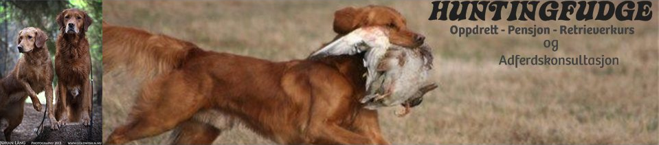 Kennel Huntingfudge