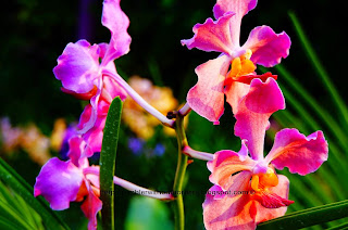 Orchid, Gardens by the Bay, Singapore