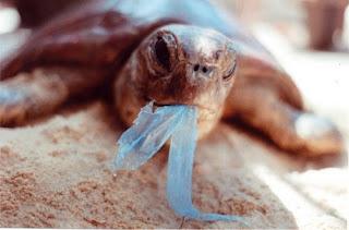Vida marina afectada por el plástico