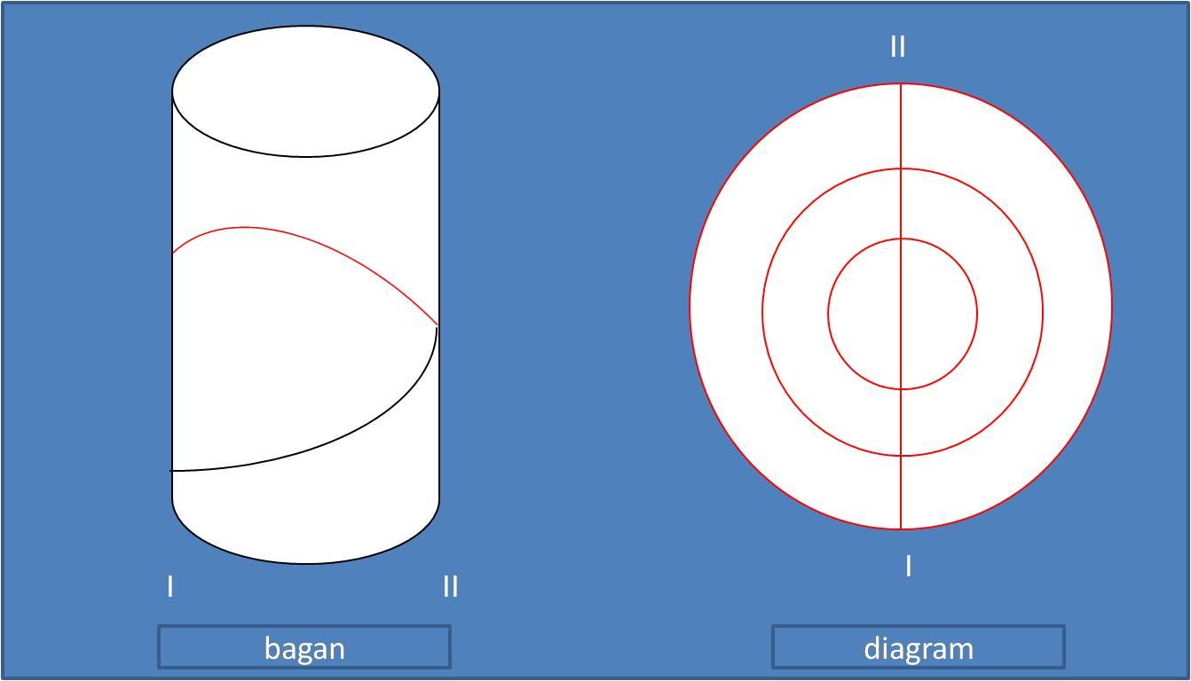 Deskripsi jagung description diagram dan rumus bunga rumus bunga untuk jagung yaitu o bunga betina k0 c62 a0 g1 ccuart Gallery