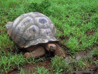 Tortoise wallpapers hd