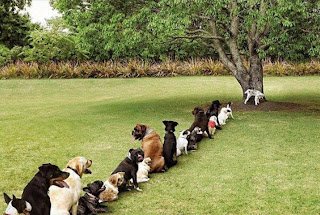 Doggy Bathroom Tree