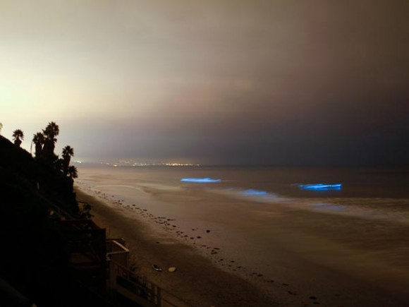 Glowing Blue Waves Explained glowing-waves-bioluminescent-ocean-life-explained-leucadia-california_50150_600x450-580x435.jpg