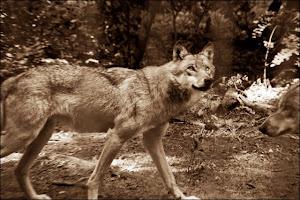 Wolfsblut, wenn Trockenfutter sein muss, dann wenigstens GUTES