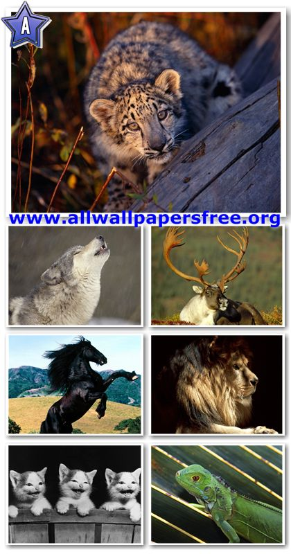 60 Amazing Animals Wallpapers 1280 X 1024 [Set 18]