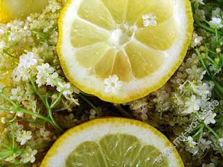 Болгарская кухня - Сироп из цветов бузины
