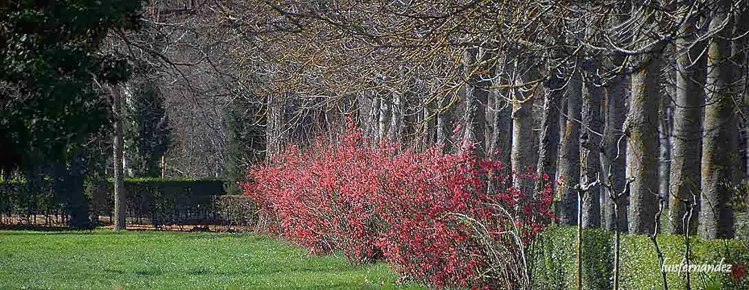 Ocio y cultura flores rojas rosas y blancas for Ocio y jardin