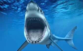Tiburón hambriento atacando