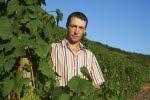 Wein- & Sektgut Daniel Anker Köwerich/Mosel , 5 Weißweine, 1 Rotwein