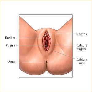 Baby split clitoris man mal