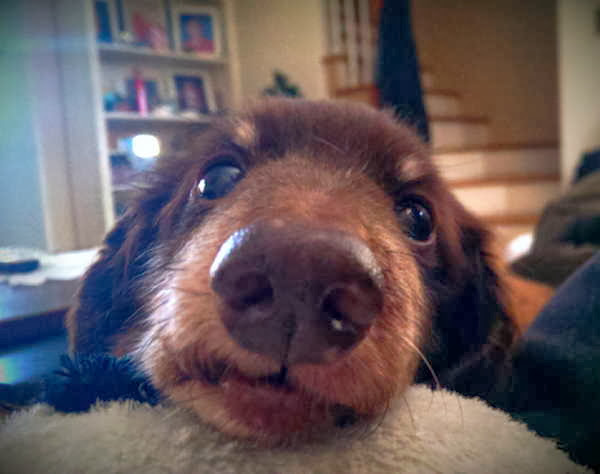 adorable dog pictures, puppy face