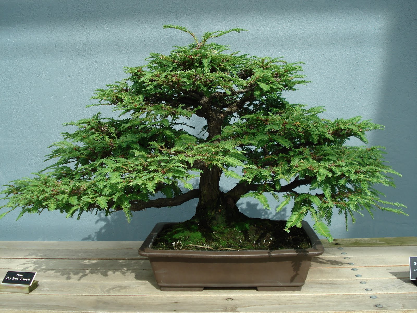 Home And Garden ALL ABOUT BONSAI TREE