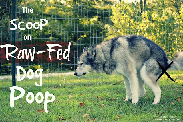 raw dog poop, what does raw fed dog poop look like
