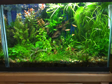 20 gallon planted aquarium with T2, GroBeam LED lighting