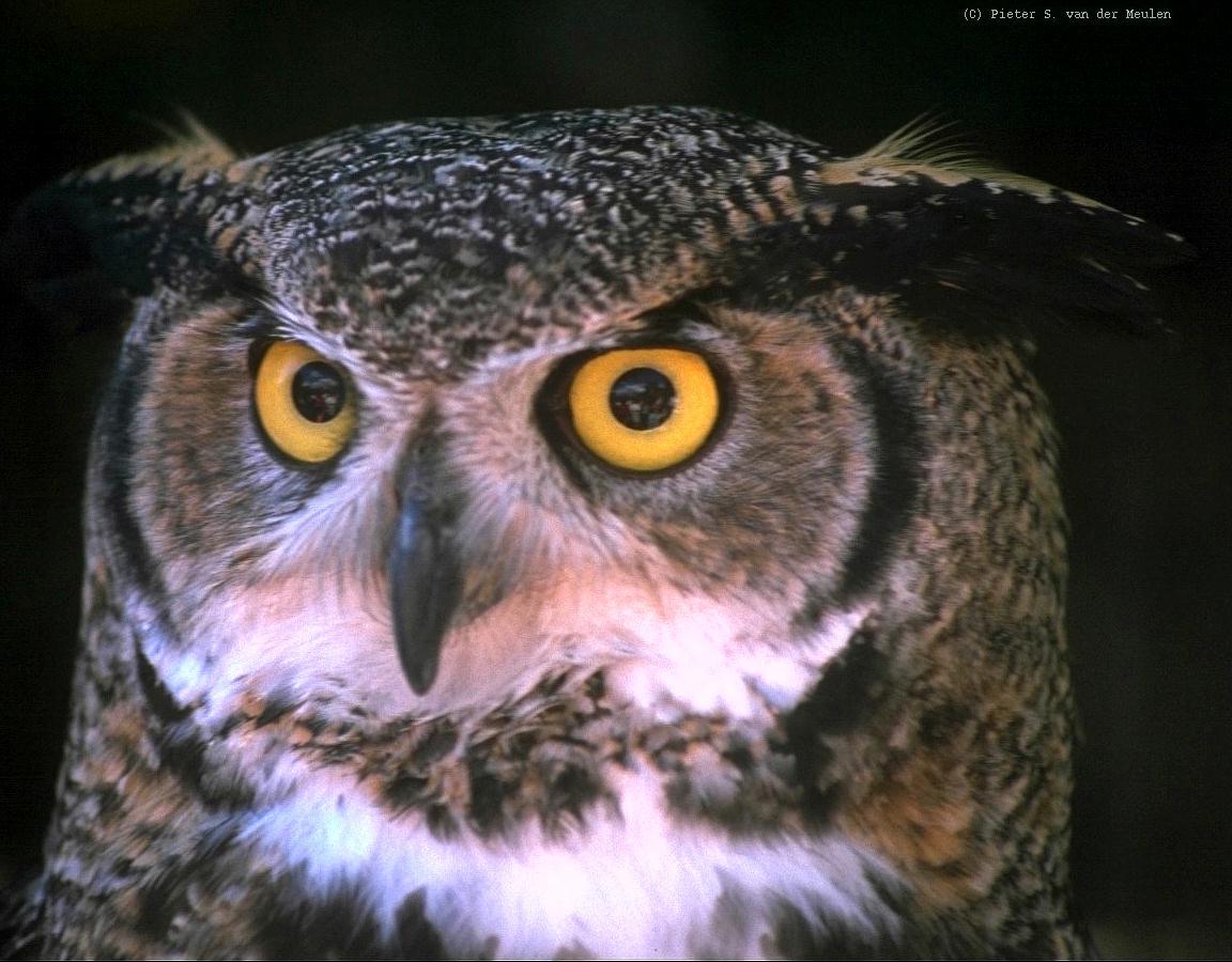 Owl 57 ΑΓΚΥΡΑ: �...
