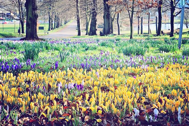 Spring Sheffield