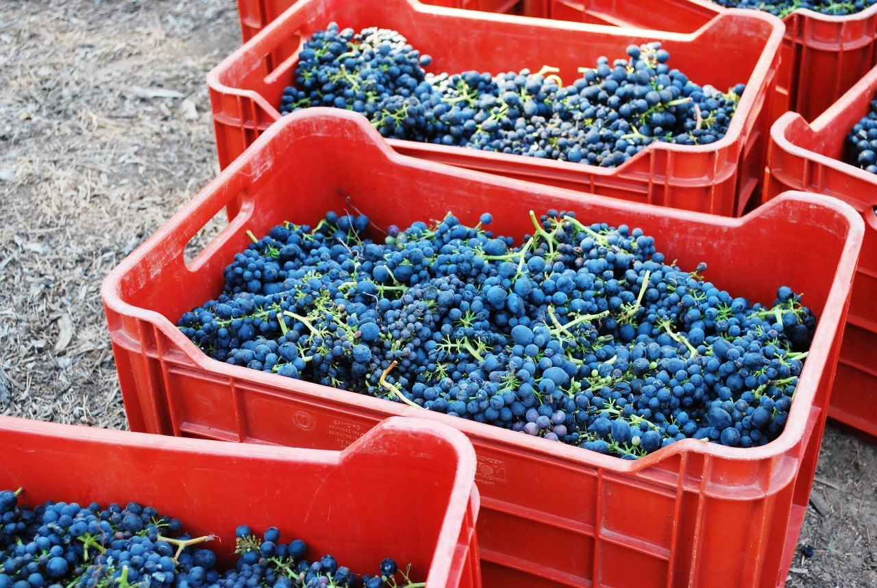 produce clerk the produce clerks handbook by rick chong many european nationalities purchase wine grapes in the fall to make wine this can be a profitable category as long as you receive a deposit 50% or full