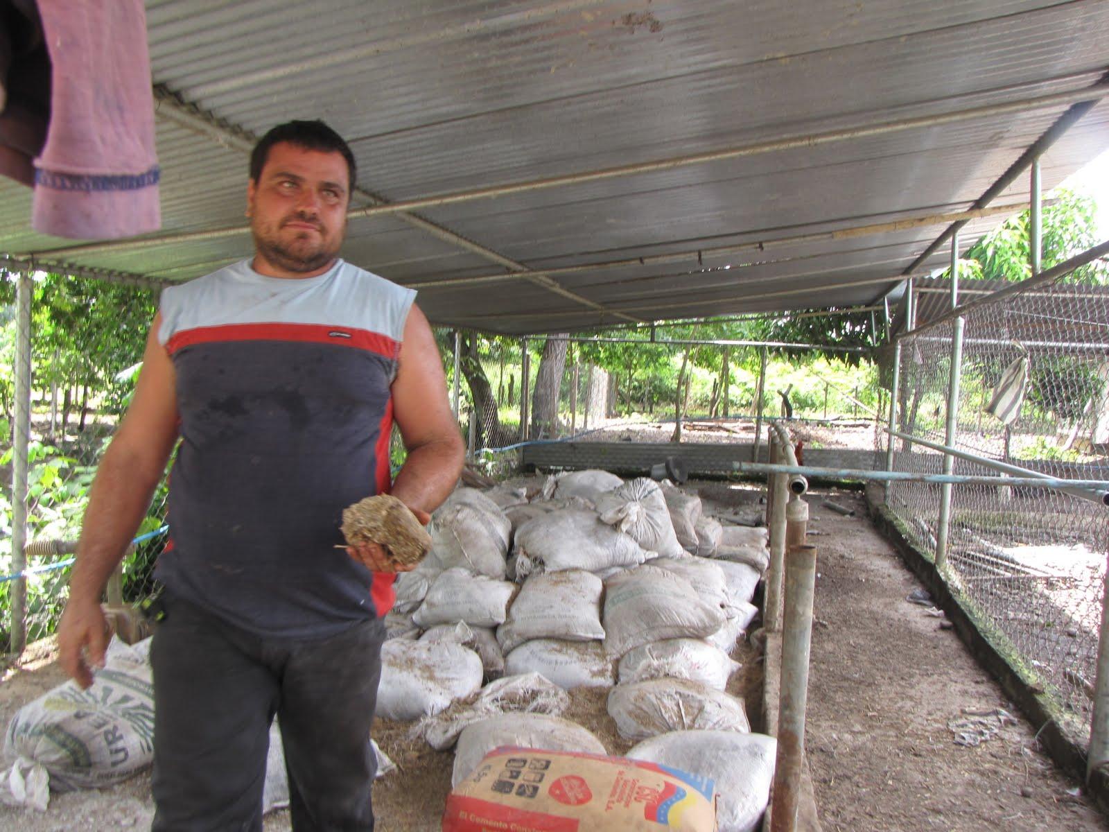 Llano extremo la creatividad aplicada a la piscicultura for Alimento para cachamas