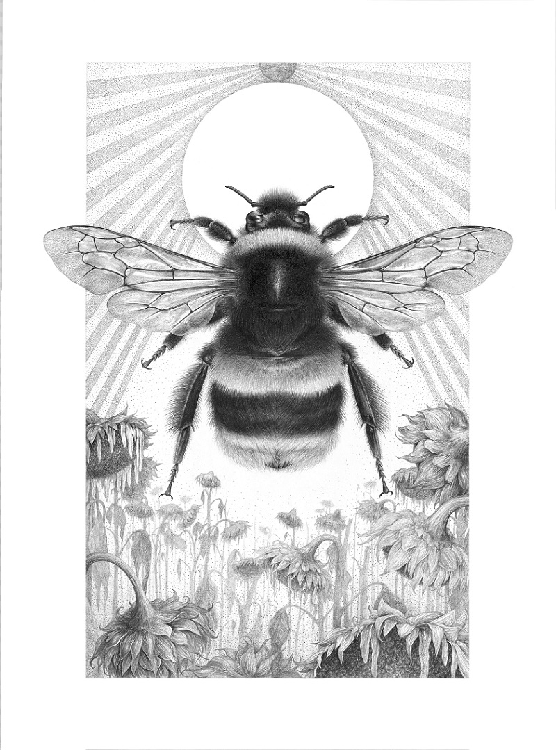 The Buff Tailed Bumblebee Bombus Terrestris 80 X 60cm Graphite And Charcoal On Blotting Paper Our Bees Are In Decline Without Them World Would