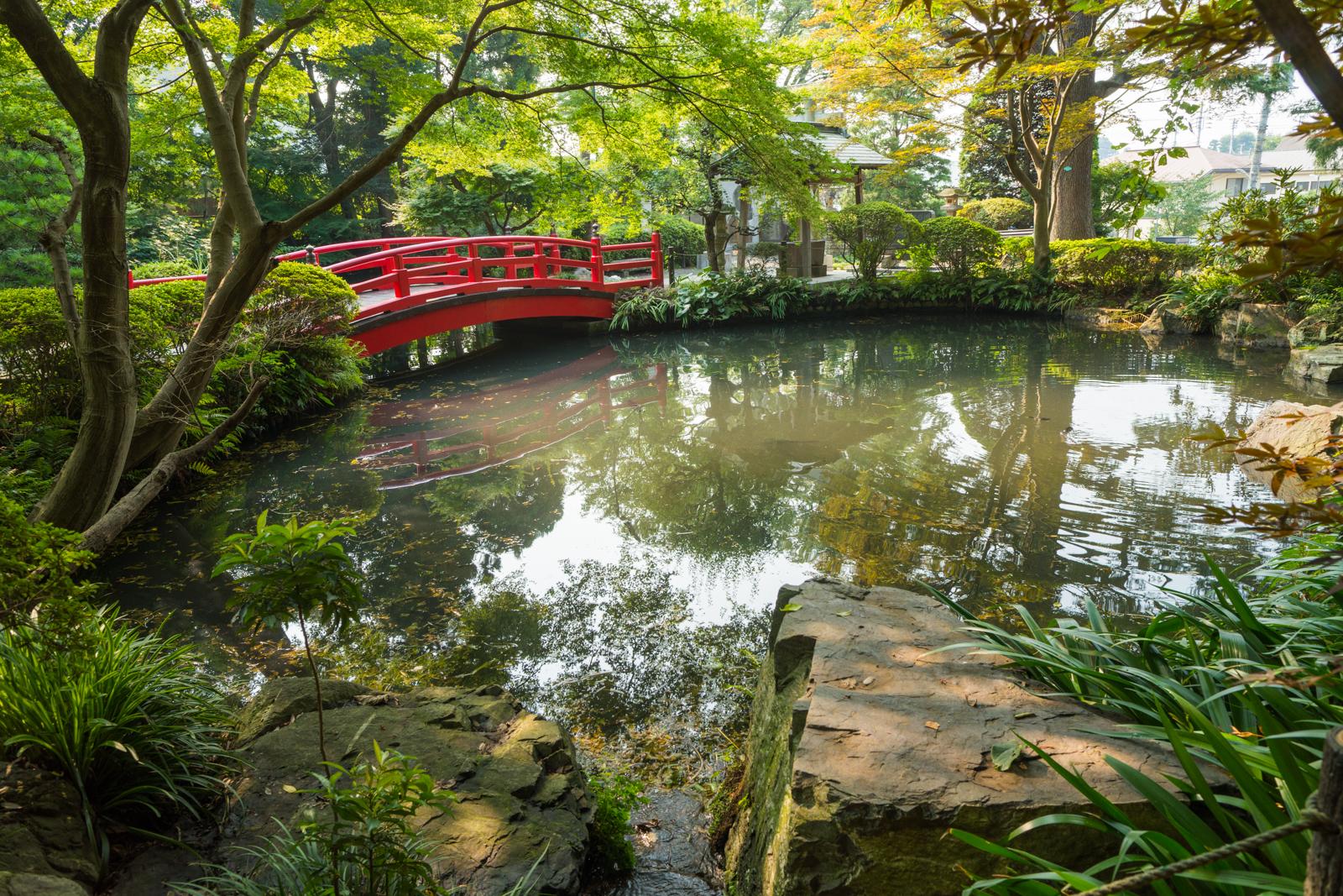 東京の名湧水57選に選ばれる貫井神社の池の写真