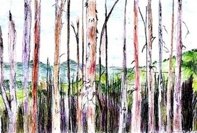 La foresta dei punti esclamativi