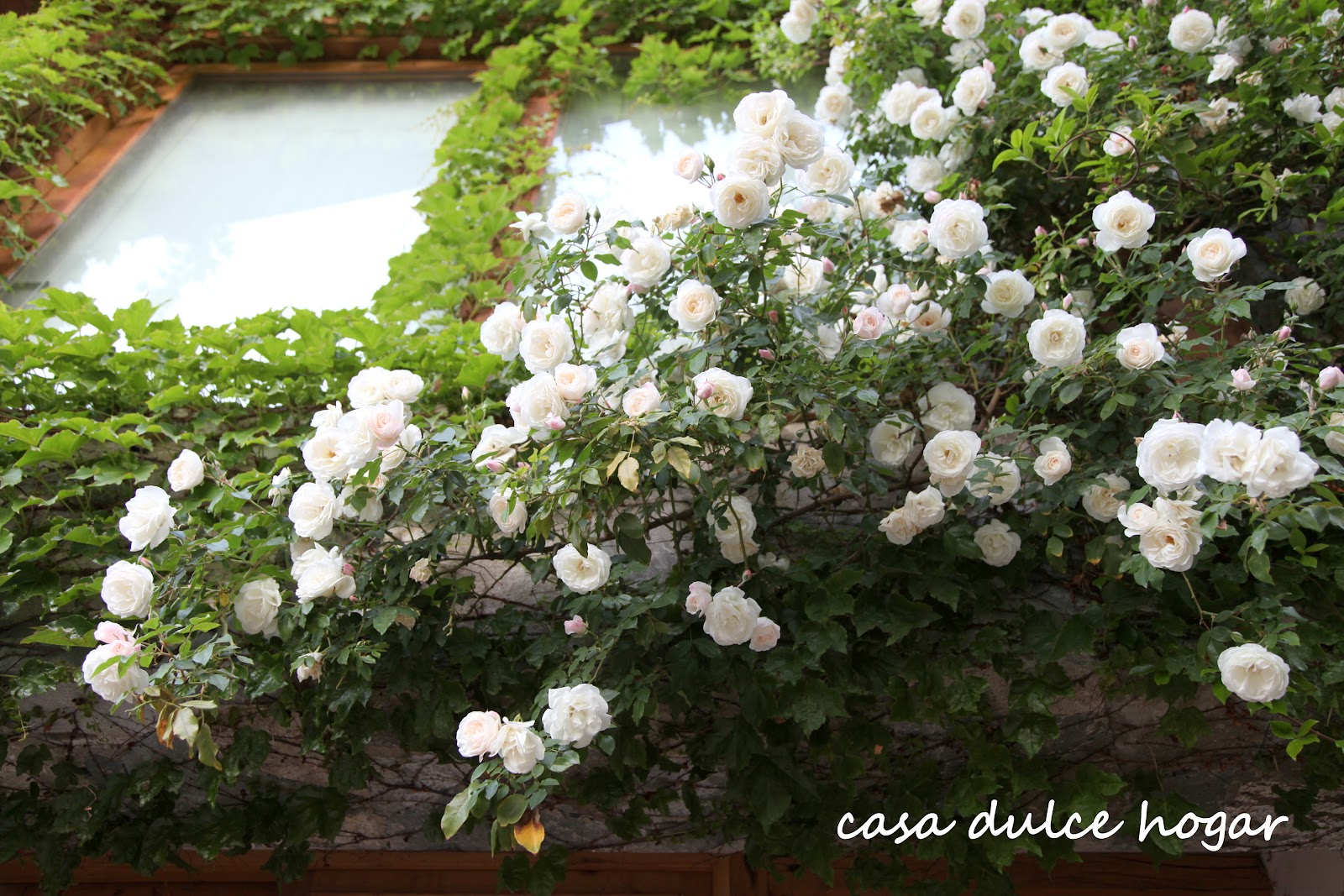 Fotos de rosas rojas y blancas de jardin photos of - Jardines con rosas ...