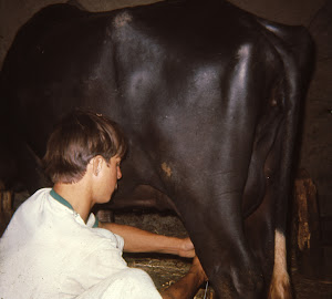 Milking My Water Buffalo