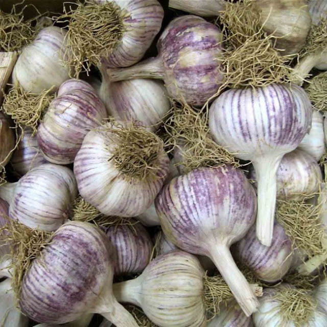 You are Most Likely Consuming Bleached And Chemical Laden Garlic From China. Here Is How To Spot It