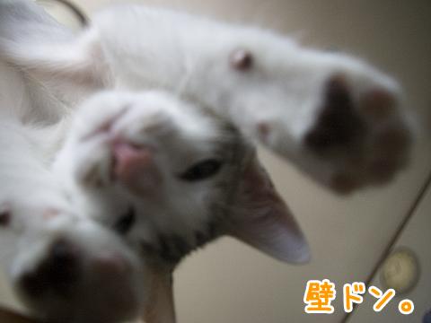 子猫の壁ドン