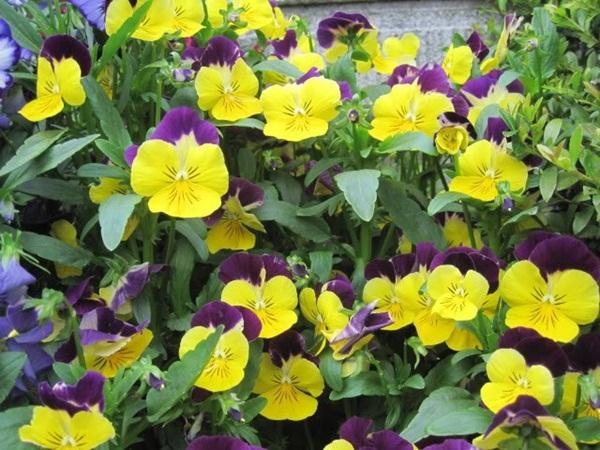 hoa dep,  hoa hong,  hoa viet , hoa lan , hoa mi mai , hoa online,  hoa qua noi gian,  hoa mi hot