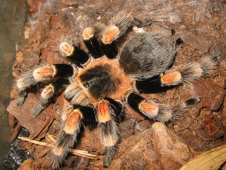 a discussion on the movie spiders and its attributions about the tarantula