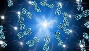 """Cette image montre un ensemble de chromosomes pris en une espèce de tourbillon bleuté avec en son centre une lumière qui irradie.  Cette image illustre le poème """"Le gène égoïste"""", titre repris du célèbre ouvrage du non moins fameux biologiste et éthologiste britannique de Richard Dawkins.  Dans ce poème, Le Marginal Magnifique développe quelques-unes des thèses de Dawkins avec des formules stylées et lapidaires sur les gènes dont la fonction est d'assurer leur transmission, cela parfois au détriment même de l'organisme qui les abrite.  Pour Le Marginal Magnifique, qui partage ces idées, ce poème est l'occasion encore une fois de développer un texte fort, bien que court, débouchant avec cynisme et dérision, deux modes de pensée chers au Marginal Magnifique, sur le constat que l'être humain ne vaut pas mieux que les gènes qu'il porte niveau égoïsme et que donc il a ce qu'il mérite."""