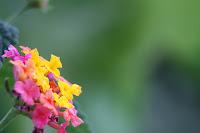 Fotos macro de colores