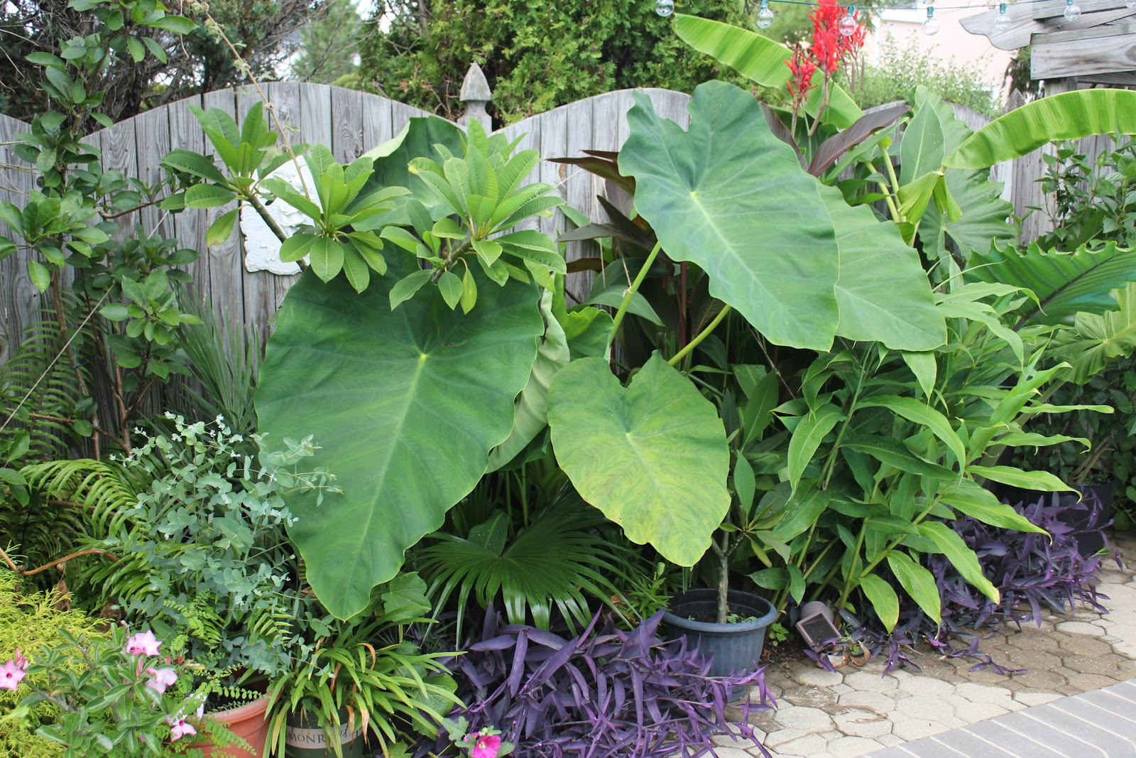 Tropical Gardening In New York City Pool Plants