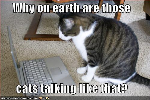 your funny cat photos Funny Cat Pictures   Cats in Compromising