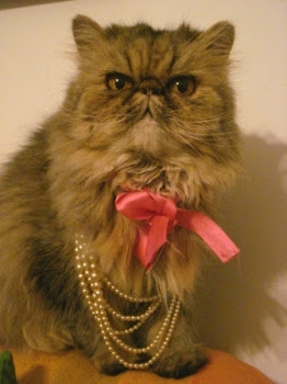 My vintage cat, Fara