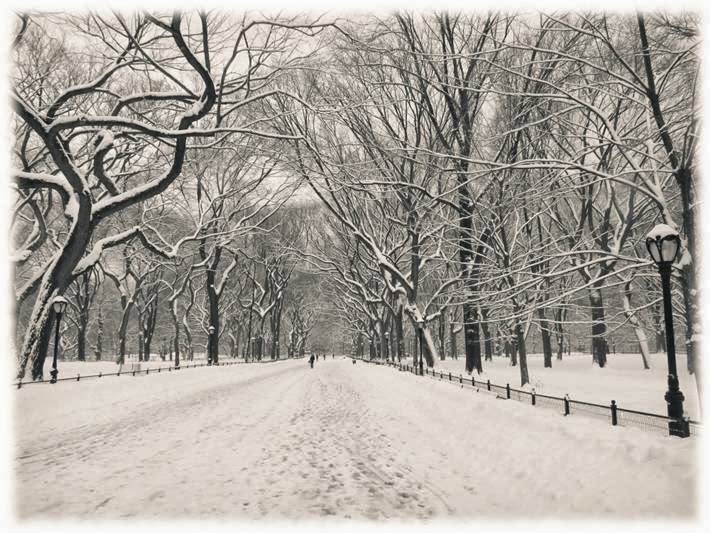 Winter Image of Central Park - New York