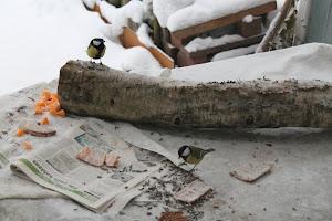 Luontotutkija ja luontokuvaaja Lehto Seppo kuvaa luonnon moninaisuutta