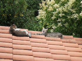 Heureux les chats sur les tuiles bien chaudes.