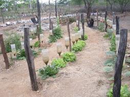 Horta Pinga Pinga