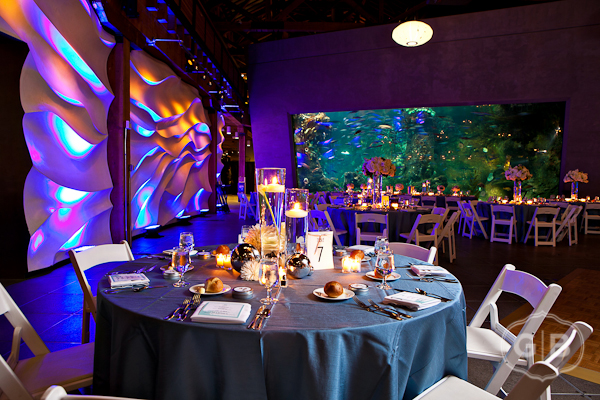 Thank You So Much Gabriel Boone Photography For The Beautiful Images Venue Seattle Aquarium