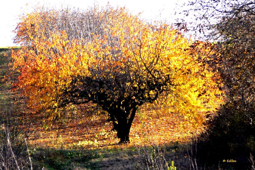 Incendie d'automne, autumn fire, ОСЕННИЙ ПОЖАР